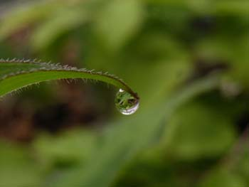 07_0516_raindrop2.jpg