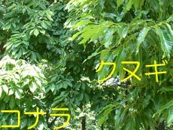 07_0604_kona_kunu.jpg