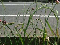 07_0605_greengrass.jpg