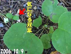 07_0623_yurinoki5.jpg