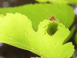 07_0629_littlebugs.jpg