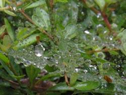 07_0707_raindrops2.jpg