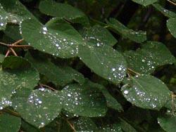 07_0707_raindrops4.jpg
