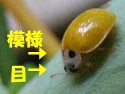 07_0719_kiiro_t2.jpg
