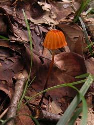 07_0726_fungi2.jpg