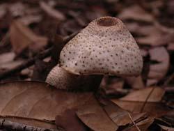 07_0729_fungi5.jpg