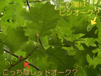 07_0801_oak2.jpg