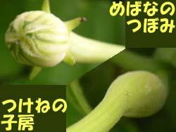 07_0808_karasu_u2.jpg