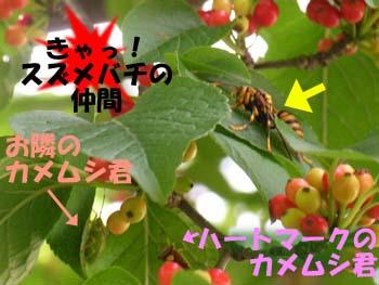07_0809_aohada8.jpg
