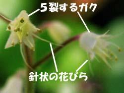 07_0825_zudayakushu4.jpg