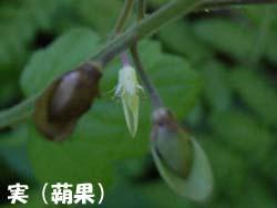 07_0825_zudayakushu5.jpg
