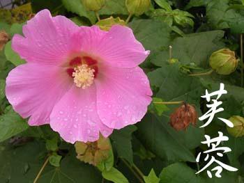 07_0901_fuyou2.jpg