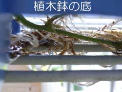 07_0905_suzume_u5.jpg