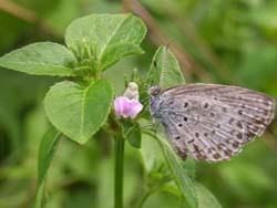 07_0919_butterfly01.jpg