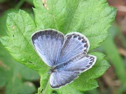 07_0919_butterfly02.jpg