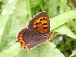07_0919_butterfly04.jpg