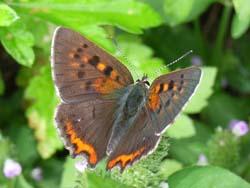 07_0919_butterfly05.jpg