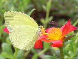 07_0919_butterfly07.jpg