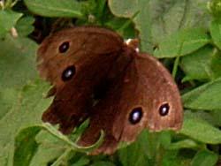 07_0919_butterfly08.jpg