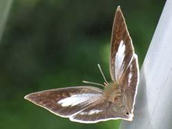 07_0919_butterfly09.jpg