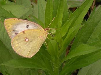 07_0919_butterfly10.jpg