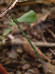 07_0919_dragonfly1.jpg