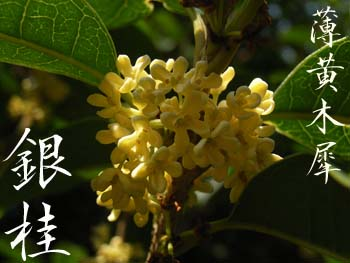 07_1005_usgi_mokusei2.jpg