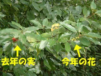 07_1106_shirodamo6.jpg