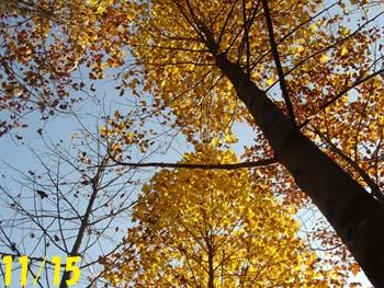 07_1117_yurinoki7.jpg