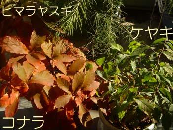 07_1128_kona_keya.jpg