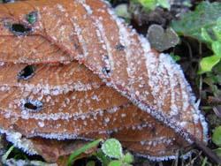07_1207_frost1.jpg