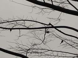 08_0123_littlebird1.jpg