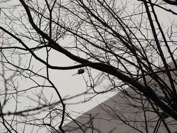 08_0123_littlebird3.jpg