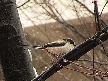 08_0123_littlebird7.jpg