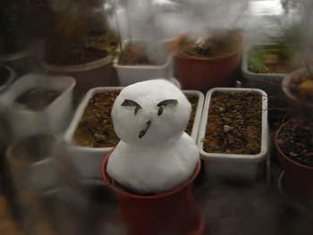 08_0203_snowman2.jpg