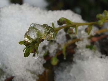 08_0207_snow3.jpg