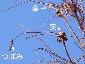 08_0213_rakuusho6.jpg