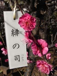 08_0223_hinotukasa.jpg