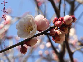 08_0223_titosegiku.jpg