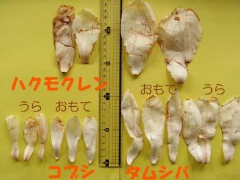 08_0406_hikaku1.jpg