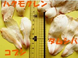 08_0406_hikaku2.jpg
