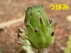 08_0413_sirobana_t6.jpg