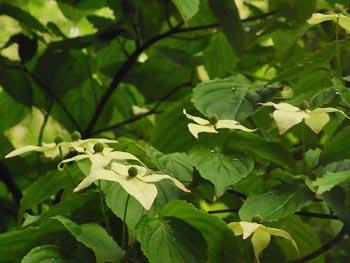 08_0515_yamabosi2.jpg