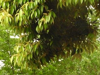 08_0519_sudajii02.jpg