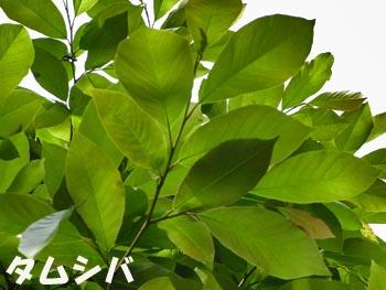 08_0521_tamusiba1.jpg