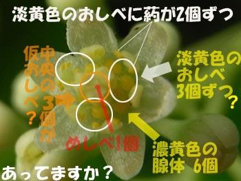 08_0525_kusunoki4.jpg