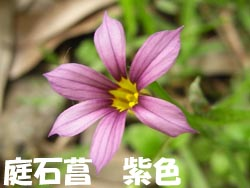 08_0609_niwazekisho02.jpg