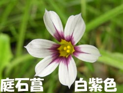 08_0609_niwazekisho03.jpg