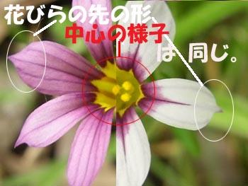 08_0609_niwazekisho04.jpg