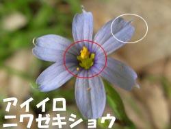 08_0609_niwazekisho05.jpg